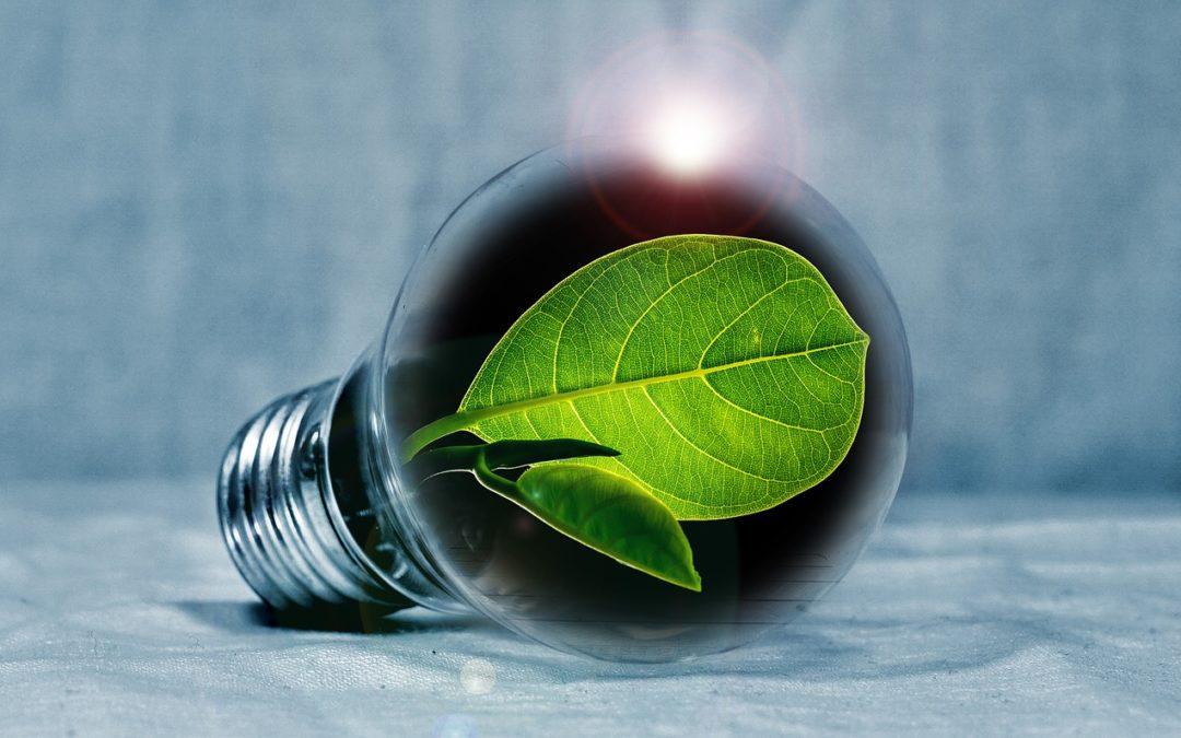 MKB Amsterdam verbindt ondernemers aan duurzaamheid